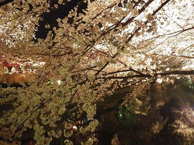 2014五条川夜桜 (6)