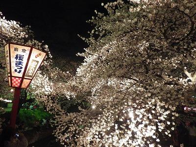 2014五条川夜桜 (7)