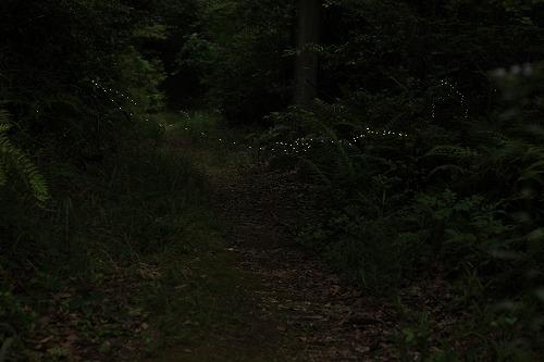 2014 6ヒメボタル (8)