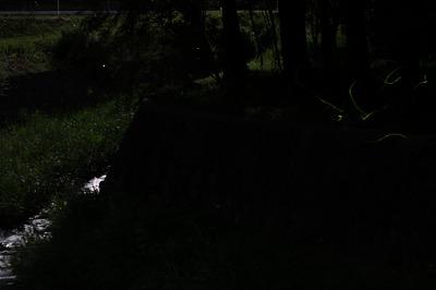 2014鳥川 (6)