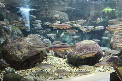 2014淡水魚水族館 (1)