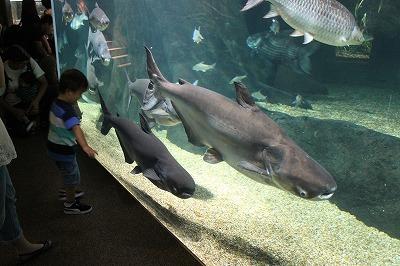 2014淡水魚水族館 (4)