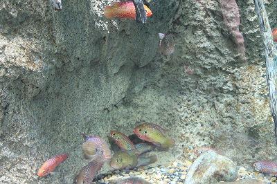2014淡水魚水族館 (5)