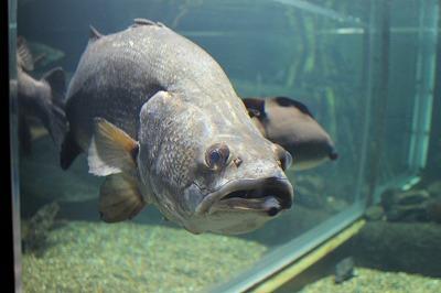 2014淡水魚水族館 (7)