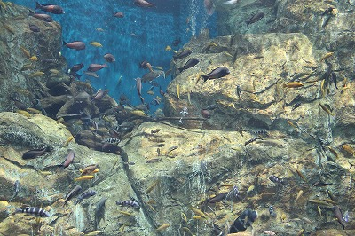 2014淡水魚水族館 (8)