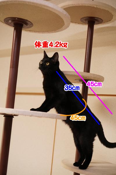ジジの身体測定