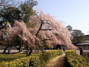 140324京都06