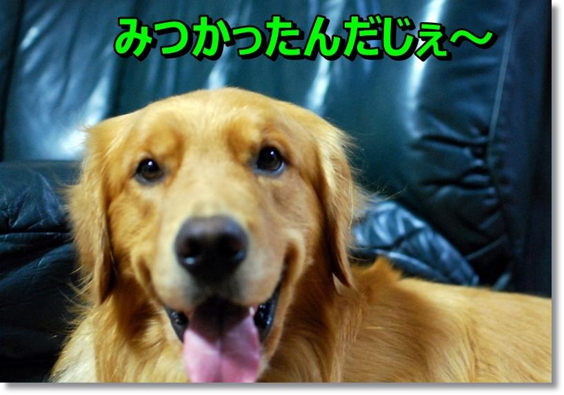 DSC_0006_201408180110142e2.jpg
