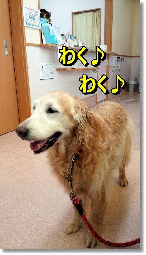 DSC_0010_201408101101469b2.jpg