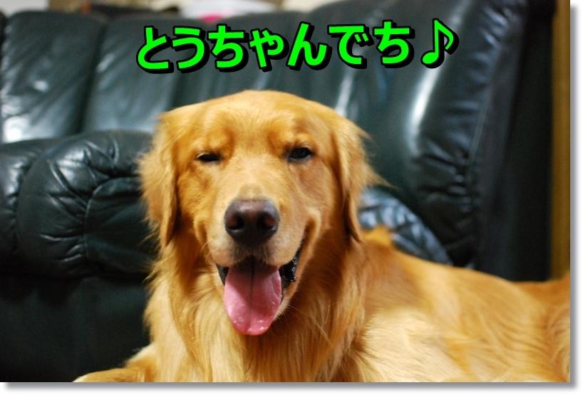 DSC_0011_20140818011015163.jpg