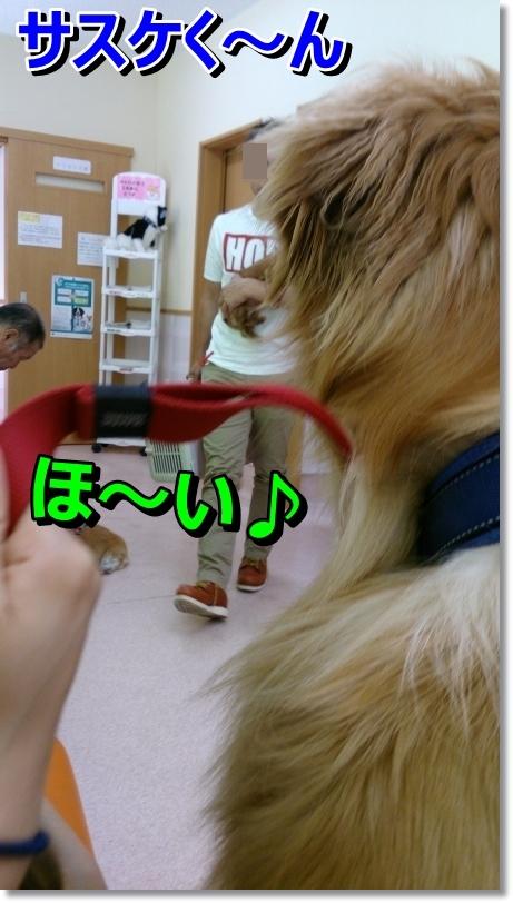 DSC_0018_20140630102332621.jpg