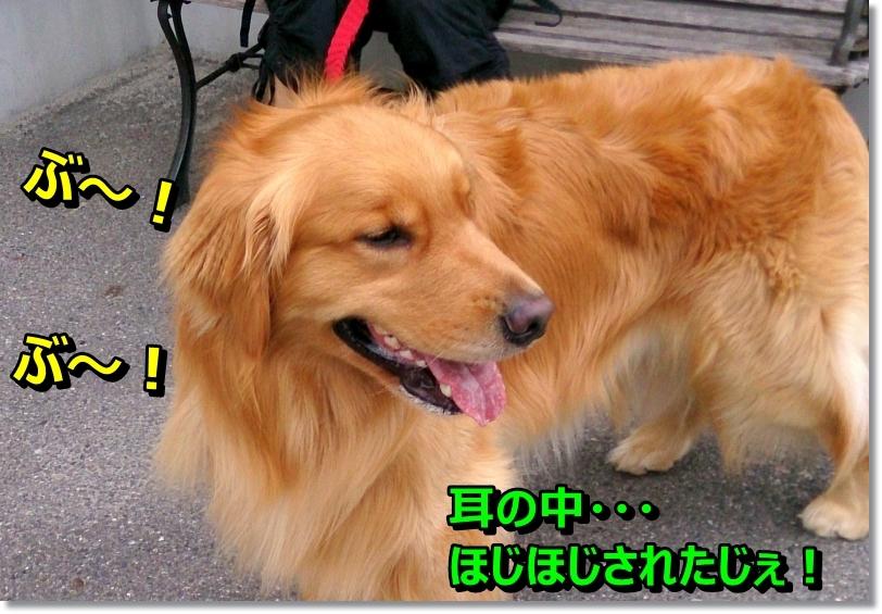 DSC_0020_201406301024440e6.jpg