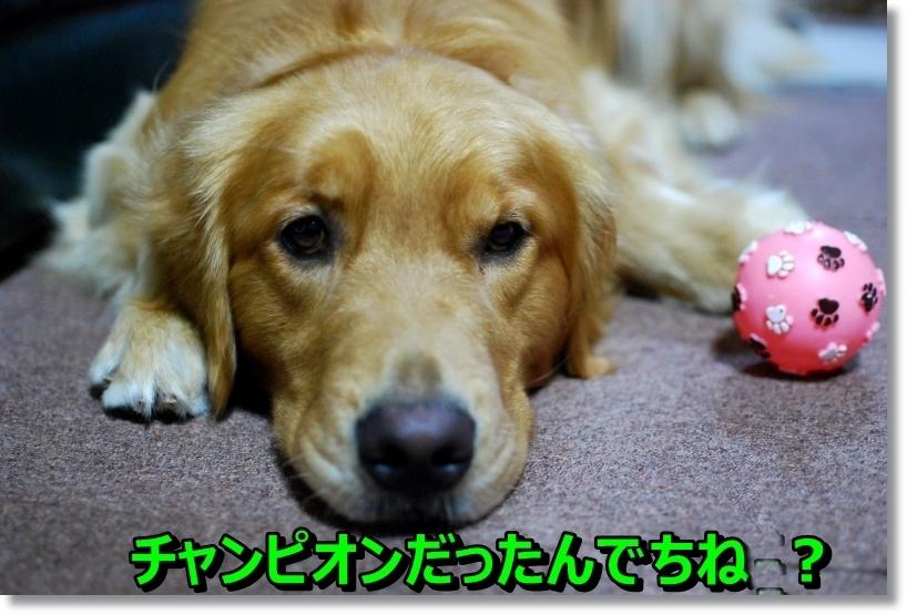 DSC_0021_2014081801103707a.jpg