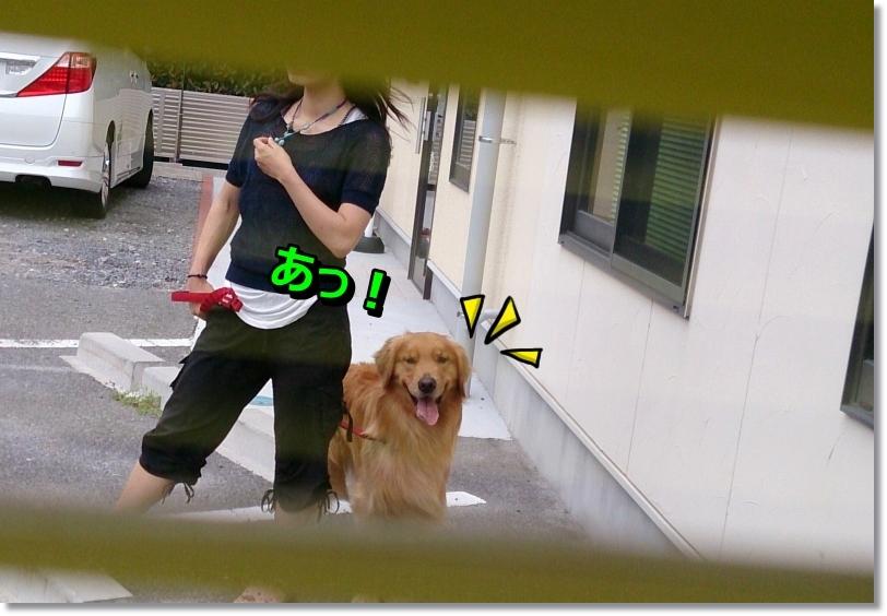 DSC_0024_201406301024483af.jpg