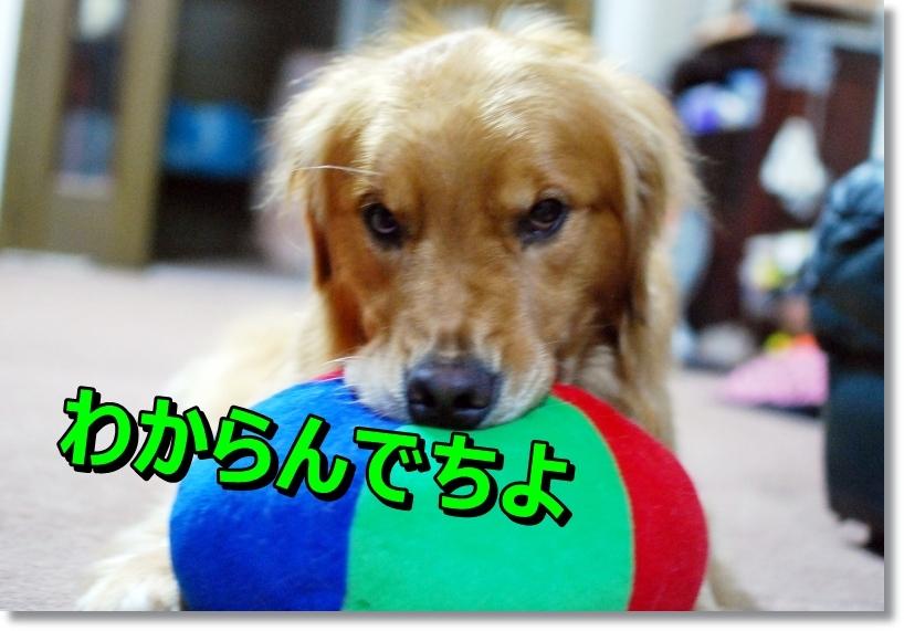 DSC_0026_20140818011041af1.jpg