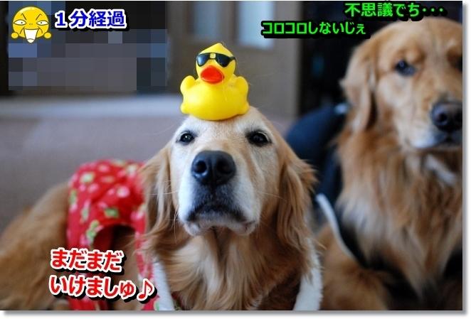 DSC_0035_20140317095224292.jpg