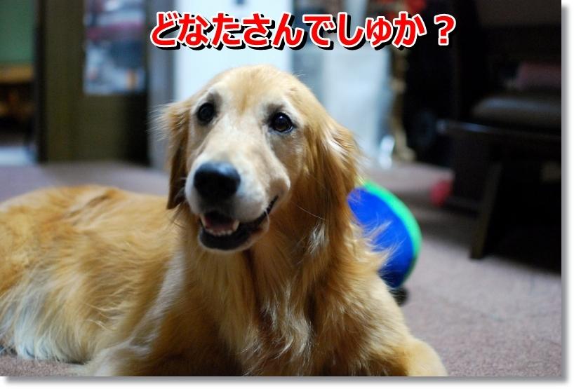 DSC_0044_20140818011120d10.jpg