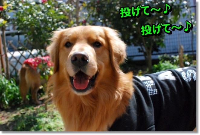 DSC_0050_20140317095259174.jpg