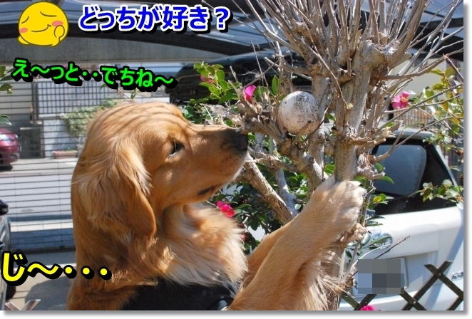 DSC_0062_20140317095320298.jpg