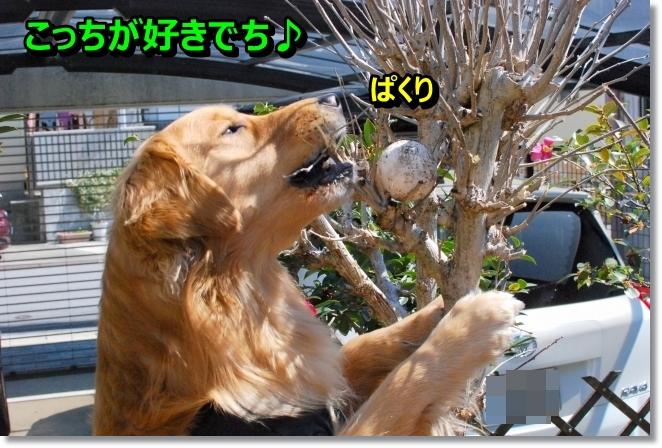 DSC_0065_201403170953524c7.jpg
