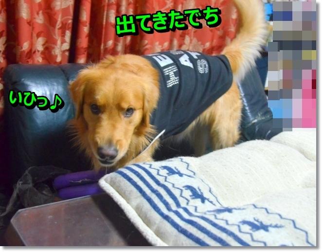 DSC_0109_2014030210555663b.jpg