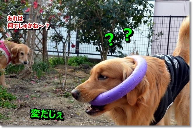 DSC_0116_20140302105618a61.jpg