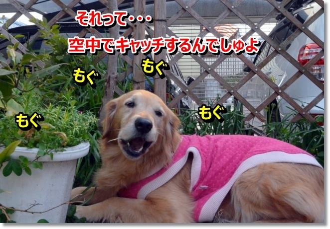 DSC_0147_20140310194723825.jpg