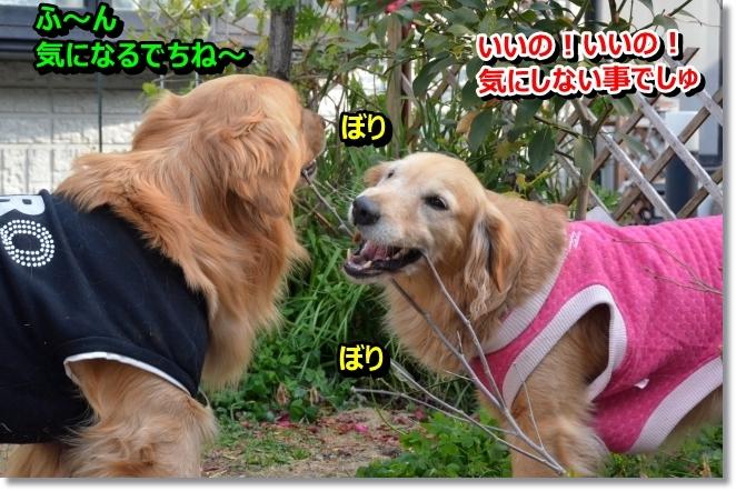 DSC_0226_20140315095913e2b.jpg