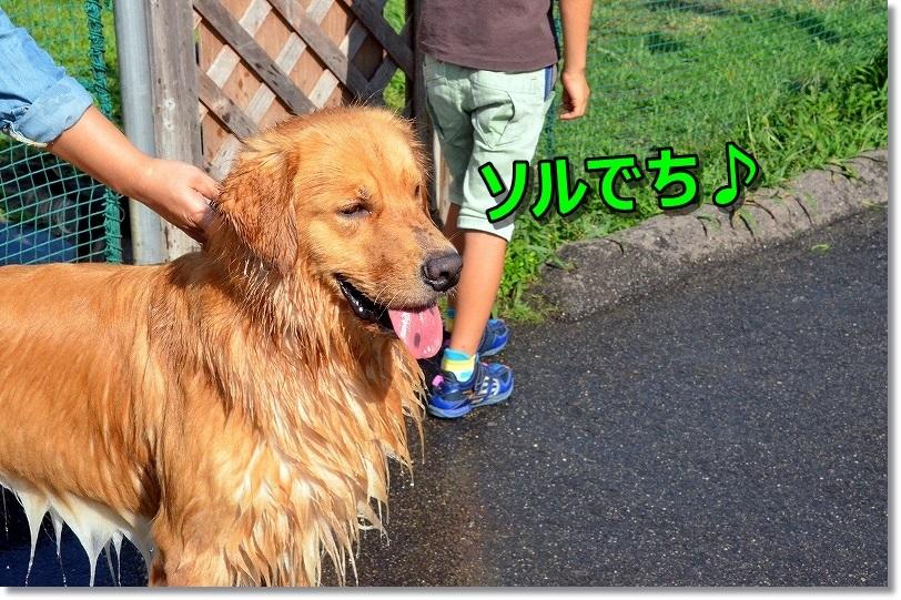 DSC_0365_201409030907049f0.jpg