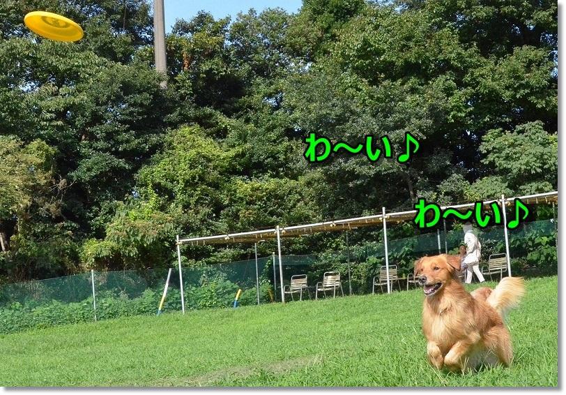 DSC_0416_20140904092441015.jpg