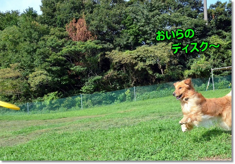DSC_0419_20140904092442d27.jpg