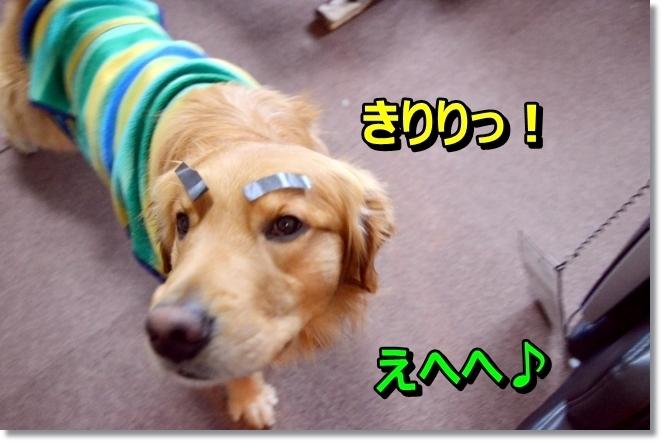 DSC_0588_20140313233832936.jpg