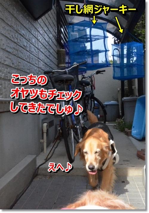 DSC_0618_20140321084327527.jpg