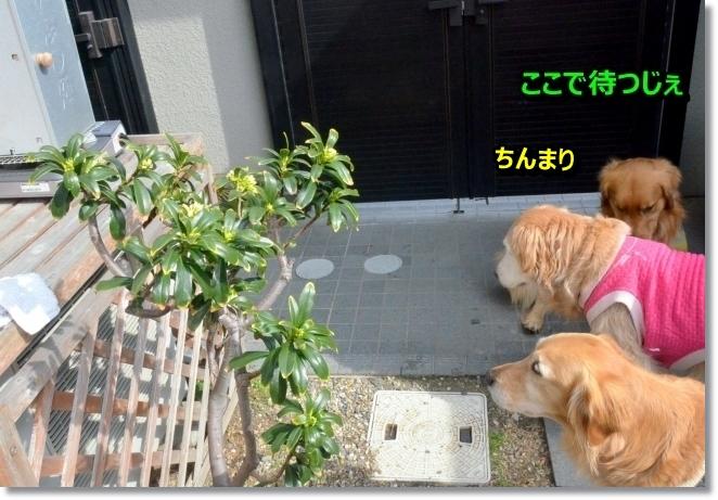 DSC_0637_201403210844107ab.jpg