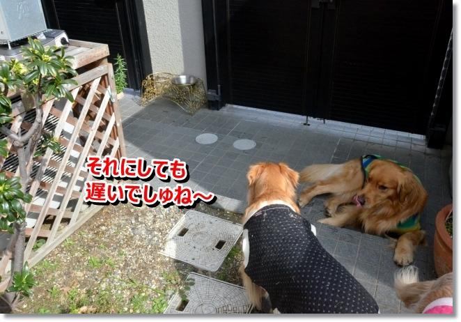 DSC_0639_201403210844122e3.jpg