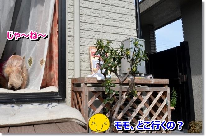 DSC_0641_2014032211033246e.jpg