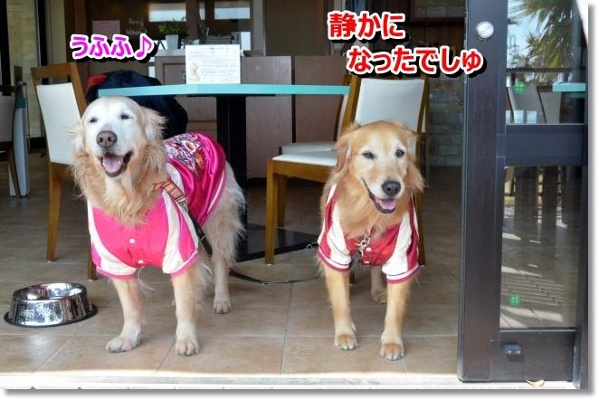 DSC_0730_20140329155320073.jpg