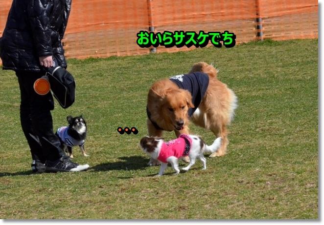 DSC_1093_20140328212043134.jpg
