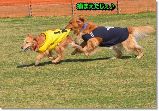 DSC_1124_201403281027041ea.jpg
