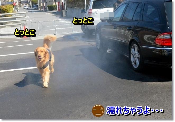 DSC_1318_20140408081057c80.jpg