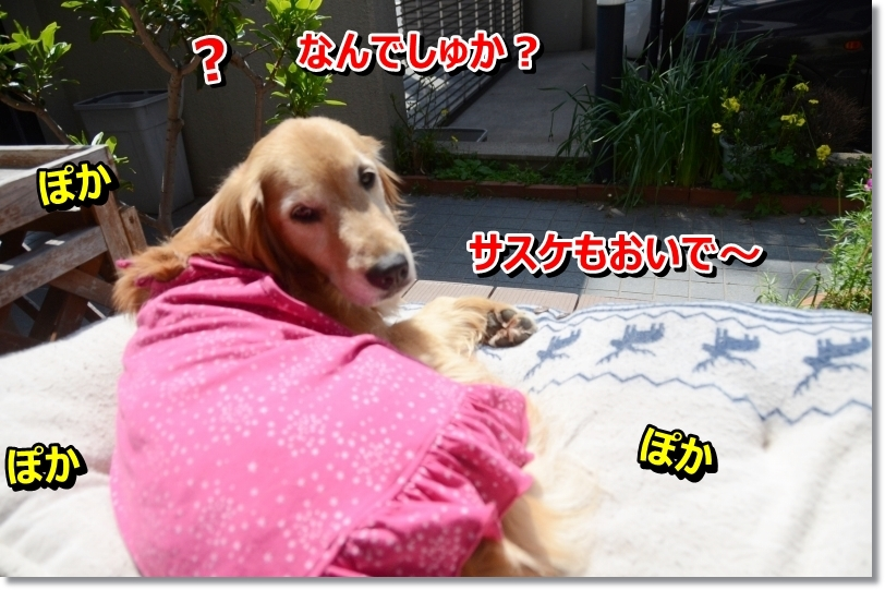 DSC_2099_201405141050143a0.jpg
