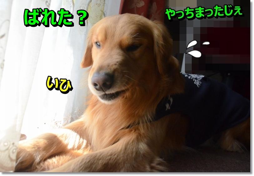DSC_2108-2.jpg