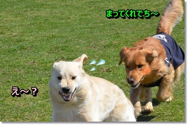 DSC_2730_2014041009214487c.jpg
