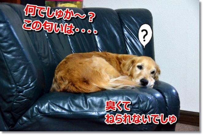 DSC_2781_20140430110245476.jpg