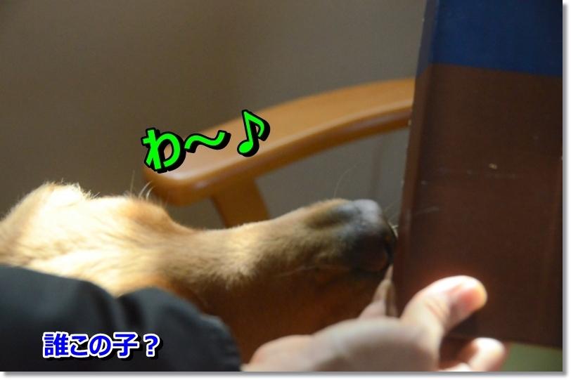 DSC_2825_201406022202097d8.jpg