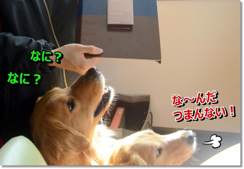 DSC_2828_20140602220210b29.jpg