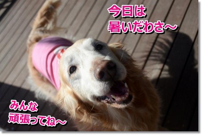 DSC_3232_201405020111245f7.jpg