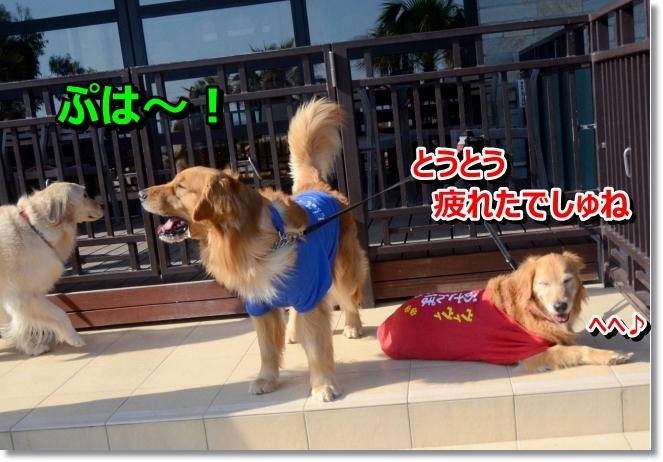DSC_3241_20140502011213eaa.jpg
