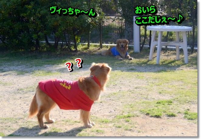 DSC_3249_20140502011237989.jpg