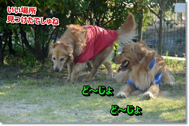 DSC_3251_20140502011240843.jpg